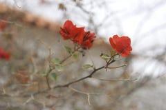Schließen Sie herauf Blume Stockbilder