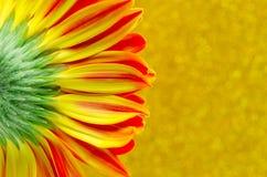 Schließen Sie herauf Blume Gerbera auf gelbem bokeh Hintergrund Lizenzfreie Stockbilder