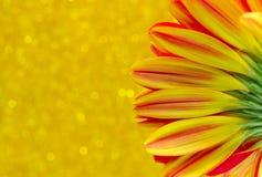 Schließen Sie herauf Blume Gerbera auf gelbem bokeh Hintergrund Lizenzfreies Stockfoto