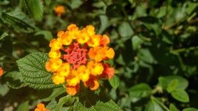 Schließen Sie herauf Blumen Lizenzfreies Stockfoto