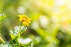 Schließen Sie herauf Blumenhintergrund Lizenzfreie Stockbilder