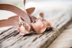 Schließen Sie herauf braunes Dipterocarpus-intricatus stockfotos