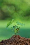 Schließen Sie herauf das Jungpflanzewachsen Lizenzfreie Stockbilder