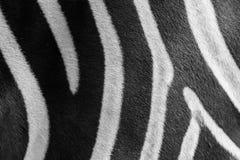 Schließen Sie herauf das Schwarzweiss Zebrahautmuster Lizenzfreie Stockfotos