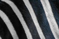 Schließen Sie herauf das Schwarzweiss Zebrahautmuster Lizenzfreies Stockbild