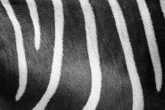 Schließen Sie herauf das Schwarzweiss Zebrahautmuster Lizenzfreie Stockfotografie