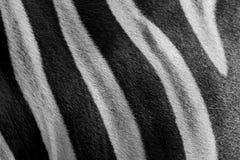 Schließen Sie herauf das Schwarzweiss Zebrahautmuster Stockfotografie