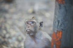 Schließen Sie herauf den Affen, der etwas vom Auto, Affen Thailand schaut Stockfoto