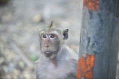 Schließen Sie herauf den Affen, der etwas vom Auto, Affen Thailand schaut Stockbild