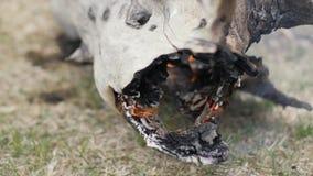 Schließen Sie herauf den alten Baum des Stammes, der im Feuer brennt Feuer und Rauch von brennendem Holz stock footage