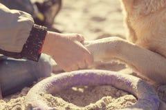 Schließen Sie herauf die Ansicht des Jungen seine Hunde halten, die Tatze mit den Hunden auf dem Sand spielen stockfotografie