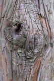 Schließen Sie herauf die Beschaffenheit und die Oberfläche der rauen Baumhaut Stockfotos