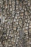 Schließen Sie herauf die Beschaffenheit und die Oberfläche der rauen Baumhaut Lizenzfreies Stockbild
