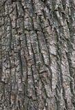 Schließen Sie herauf die Beschaffenheit und die Oberfläche der rauen Baumhaut Lizenzfreies Stockfoto