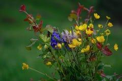Schließen Sie herauf die bunte Wildflower-Kosmosflora stockfotografie