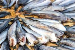 schließen Sie herauf die Fische, die auf dem Korb trocken sind, der für Blitz im Freien ist Stockfoto