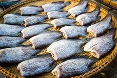 schließen Sie herauf die Fische, die auf dem Korb trocken sind, der für Blitz im Freien ist Lizenzfreie Stockfotografie