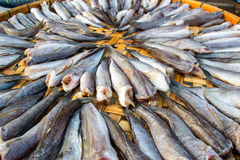 schließen Sie herauf die Fische, die auf dem Korb trocken sind, der für Blitz im Freien ist Lizenzfreies Stockfoto