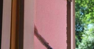 Schließen Sie herauf die Frauenhandholdingbürste, die rosa Farbe malt stock video footage