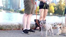 Schließen Sie herauf die Leute, die für Hund gehen stock video footage