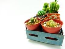 Schließen Sie herauf die 2 Reihen-Sammlung Kaktusweißhintergrund stockfotos