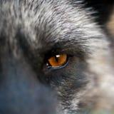Schließen Sie herauf die Tier Augen Lizenzfreie Stockbilder