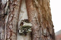 Schließen Sie herauf die Wespen, die Larven auf dem Nest konstruieren und schützen lizenzfreie stockfotografie