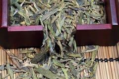 Schließen Sie herauf fesh Grünteeblätter mit Morgenaufflackern Stockfoto