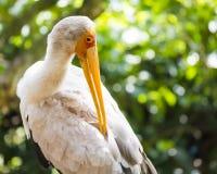 Schließen Sie herauf Flamingo am Park Lizenzfreies Stockbild