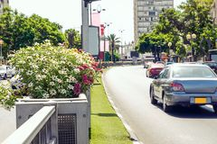Schließen Sie herauf fokussiertes Blumenbeet auf dem Trennstreifen der Stadtverkehrsstraße Kein aktiver Stau in der Straßenstraße Lizenzfreie Stockfotos