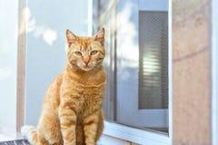 Schließen Sie herauf Foto der roten Katze Stockfotos