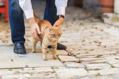 Schließen Sie herauf Foto der roten Katze mit den grünen Augen, die gerade in Richtung der Kamera blicken Stockfotos