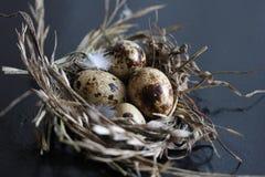 Schließen Sie herauf Foto der Wachteleier in einem Nest Stockfotografie