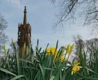 Schließen Sie herauf Frühlings-Narzissen mit einem Grabsteinkirchturm im Hintergrund stockfotos