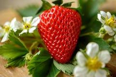 Schließen Sie herauf frische Erdbeeren Stockbild