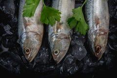 Schließen Sie herauf frische Makrelenfische im Eis auf dunklem Hintergrund, Meeresfrüchtemarkt Lizenzfreies Stockbild