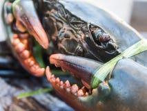 Schließen Sie herauf frische Meereskrabben vom Golf von Thailand Stockfoto