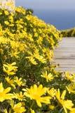 Schließen Sie herauf gelbe Blumen Stockbild