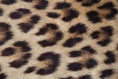 Schließen Sie herauf gelbe Leopardhaut Stockfotos