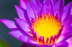 Schließen Sie herauf gelben Blütenstaub Lizenzfreie Stockfotografie