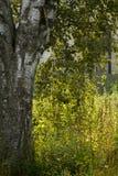 Schließen Sie herauf grünes Gras im sunrice Lizenzfreie Stockbilder