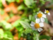 Schließen Sie herauf Grasblume stockfotos