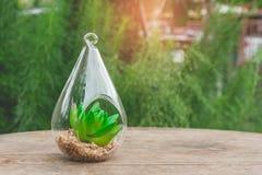 Schließen Sie herauf hängenden Blumentopf des Zierpflanzeklarglases in der Einstellung des modernen Designs auf Holztisch lizenzfreies stockbild