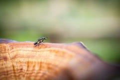 Schließen Sie herauf Insekt auf dem braunen Holz im Wald, Makroinsekt im Garten Lizenzfreies Stockbild