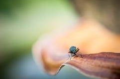 Schließen Sie herauf Insekt auf dem braunen Holz im Wald, Makroinsekt im Garten Lizenzfreies Stockfoto