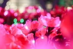Schließen Sie herauf künstliche rosa Blume in der Weichzeichnung Stockbilder