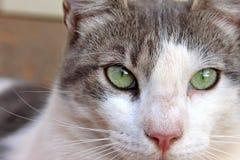 Schließen Sie herauf Katze Stockfoto