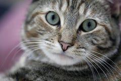 Schließen Sie herauf Katze Lizenzfreie Stockfotos