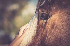 Schließen Sie herauf Kindernoten-Gesicht des Pferds Stockbilder