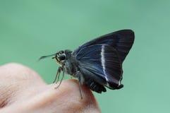 Schließen Sie herauf kleinen Schmetterling Lizenzfreie Stockfotos